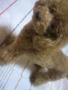 愛犬鈴ちゃん~トイプードル☆ライフスタイル~-2011101721540000.jpg
