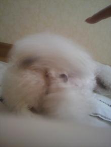 愛犬鈴ちゃん~トイプードル☆ライフスタイル~-2011101812160001.jpg