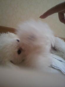 愛犬鈴ちゃん~トイプードル☆ライフスタイル~-2011101812160002.jpg