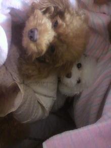 愛犬鈴ちゃん~トイプードル☆ライフスタイル~-2011101923430001.jpg