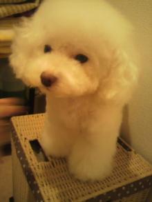 愛犬鈴ちゃん~トイプードル☆ライフスタイル~-2011102820380000.jpg