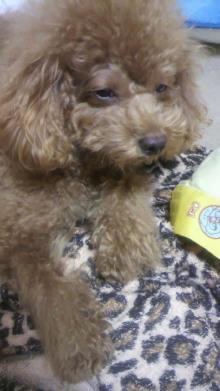 愛犬鈴ちゃん~トイプードル☆ライフスタイル~-2011102903130000.jpg