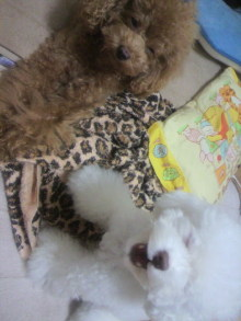 愛犬鈴ちゃん~トイプードル☆ライフスタイル~-2011102903140000.jpg