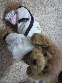 愛犬鈴ちゃん~トイプードル☆ライフスタイル~-2011102906110000.jpg