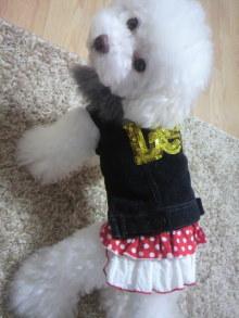 愛犬鈴ちゃん~トイプードル☆ライフスタイル~-2011102906100001.jpg