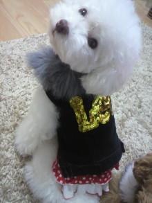 愛犬鈴ちゃん~トイプードル☆ライフスタイル~-2011102906100002.jpg