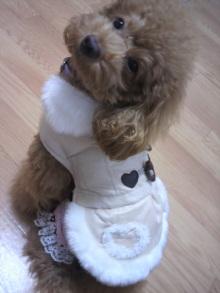 愛犬鈴ちゃん~トイプードル☆ライフスタイル~-2011102906210000.jpg