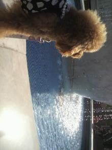 愛犬鈴ちゃん~トイプードル☆ライフスタイル~-2011102909480000.jpg