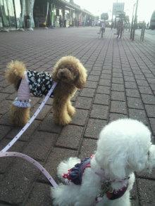 愛犬鈴ちゃん~トイプードル☆ライフスタイル~-2011102914150000.jpg