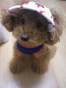 愛犬鈴ちゃん~トイプードル☆ライフスタイル~-2011103120010000.jpg
