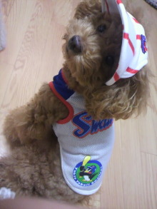 愛犬鈴ちゃん~トイプードル☆ライフスタイル~-2011103120010002.jpg