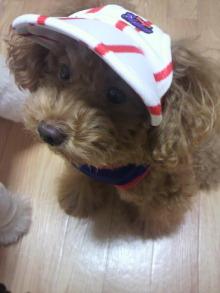 愛犬鈴ちゃん~トイプードル☆ライフスタイル~-2011103120010001.jpg