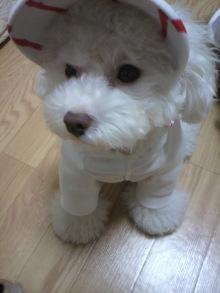 愛犬鈴ちゃん~トイプードル☆ライフスタイル~-2011103120040001.jpg