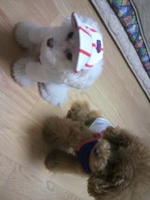 愛犬鈴ちゃん~トイプードル☆ライフスタイル~-2011103120040000.jpg