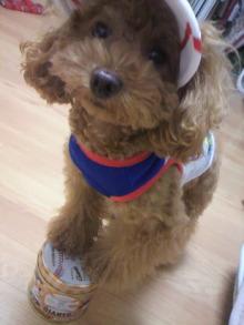 愛犬鈴ちゃん~トイプードル☆ライフスタイル~-2011103120030001.jpg
