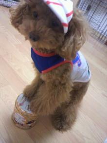 愛犬鈴ちゃん~トイプードル☆ライフスタイル~-2011103120020000.jpg