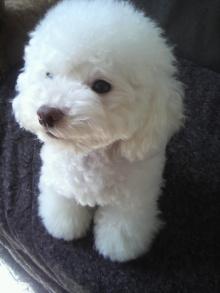 愛犬鈴ちゃん~トイプードル☆ライフスタイル~-2011110212510001.jpg