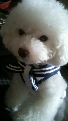 愛犬鈴ちゃん~トイプードル☆ライフスタイル~-2011110214530000.jpg