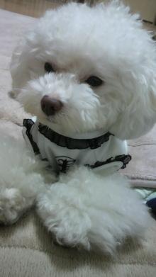 愛犬鈴ちゃん~トイプードル☆ライフスタイル~-2011110319220000.jpg