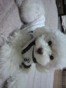 愛犬鈴ちゃん~トイプードル☆ライフスタイル~-2011110322400001.jpg