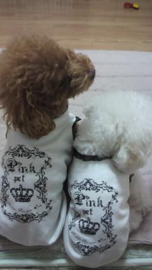 愛犬鈴ちゃん~トイプードル☆ライフスタイル~-2011110322470001.jpg