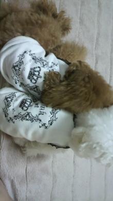 愛犬鈴ちゃん~トイプードル☆ライフスタイル~-2011110322470000.jpg