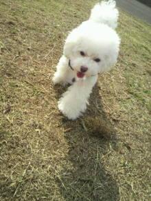 愛犬鈴ちゃん~トイプードル☆ライフスタイル~-2011110410330000.jpg