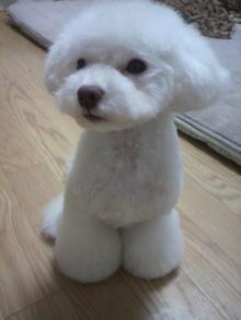 愛犬鈴ちゃん~トイプードル☆ライフスタイル~-2011110417220001.jpg