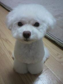 愛犬鈴ちゃん~トイプードル☆ライフスタイル~-2011110417220000.jpg