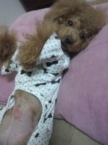 愛犬鈴ちゃん~トイプードル☆ライフスタイル~-2011110521320001.jpg