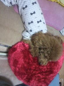 愛犬鈴ちゃん~トイプードル☆ライフスタイル~-2011111001290002.jpg