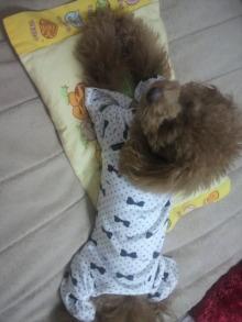 愛犬鈴ちゃん~トイプードル☆ライフスタイル~-2011111003110001.jpg