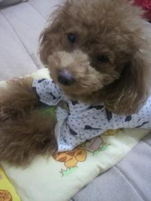 愛犬鈴ちゃん~トイプードル☆ライフスタイル~-2011111003110002.jpg