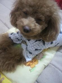 愛犬鈴ちゃん~トイプードル☆ライフスタイル~-2011111003110003.jpg