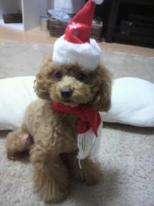 愛犬鈴ちゃん~トイプードル☆ライフスタイル~-2011111416480004.jpg