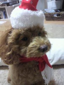 愛犬鈴ちゃん~トイプードル☆ライフスタイル~-2011111416480003.jpg
