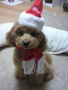 愛犬鈴ちゃん~トイプードル☆ライフスタイル~-2011111416460002.jpg