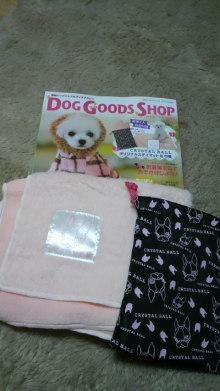愛犬鈴ちゃん~トイプードル☆ライフスタイル~-2011111418080001.jpg