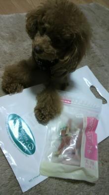 愛犬鈴ちゃん~トイプードル☆ライフスタイル~-2011111418060000.jpg