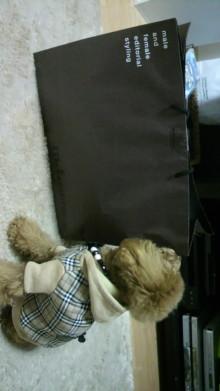愛犬鈴ちゃん~トイプードル☆ライフスタイル~-2011111418090000.jpg