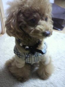 愛犬鈴ちゃん~トイプードル☆ライフスタイル~-2011111418010000.jpg
