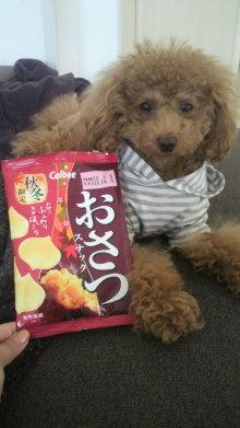 愛犬鈴ちゃん~トイプードル☆ライフスタイル~-2011111513070000.jpg
