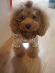 愛犬鈴ちゃん~トイプードル☆ライフスタイル~-2011111603160000.jpg