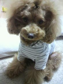 愛犬鈴ちゃん~トイプードル☆ライフスタイル~-2011111603140001.jpg