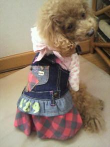 愛犬鈴ちゃん~トイプードル☆ライフスタイル~-2011111709590000.jpg