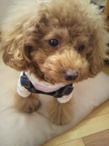愛犬鈴ちゃん~トイプードル☆ライフスタイル~-2011111709590001.jpg