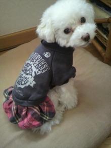 愛犬鈴ちゃん~トイプードル☆ライフスタイル~-2011111710000000.jpg