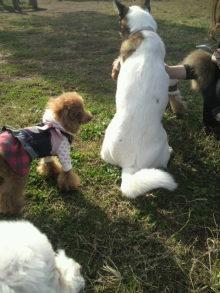 愛犬鈴ちゃん~トイプードル☆ライフスタイル~-2011111712570000.jpg