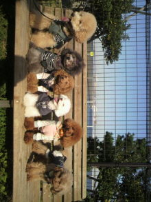 愛犬鈴ちゃん~トイプードル☆ライフスタイル~-2011111713010002.jpg