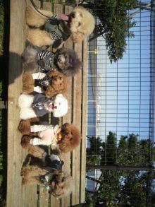 愛犬鈴ちゃん~トイプードル☆ライフスタイル~-2011111713010003.jpg